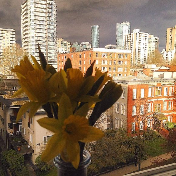 Daffodils Amid A Storm